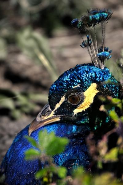 azul verde colorido ojo organo negro