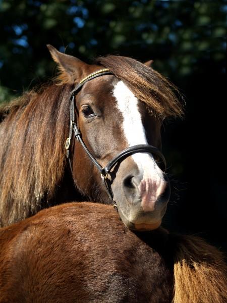 caballo marron caballos bebe semental snuggle