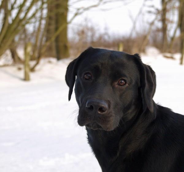 retrato de perro en la nieve