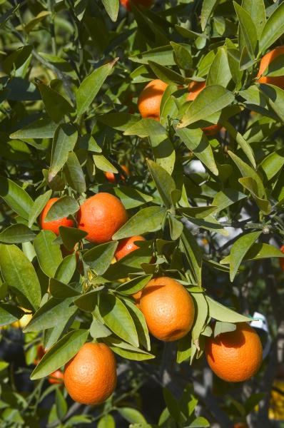 naranja turismo frutas francia cal limon