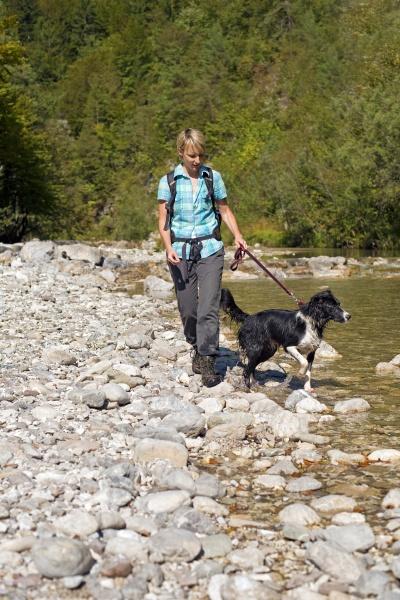 deporte deportes perro senderismo rio agua
