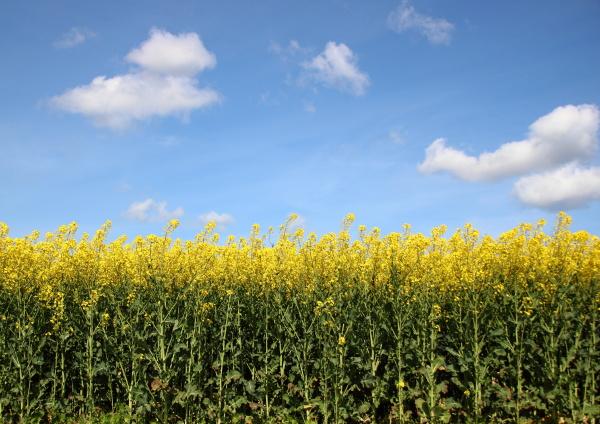 agricultura fondo amarillo