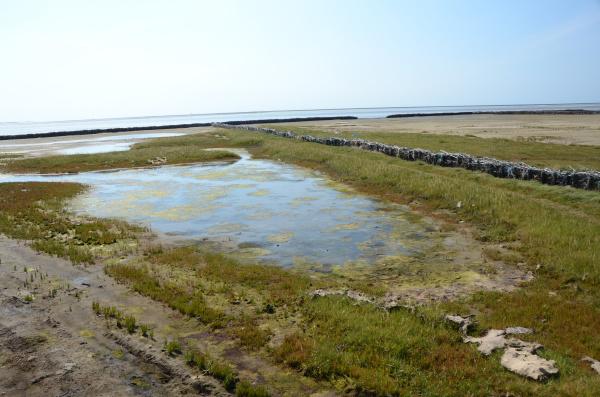 recuperacion de tierras mar del norte