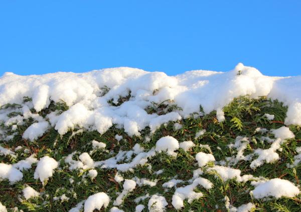 hermoso bueno primer plano invierno verde