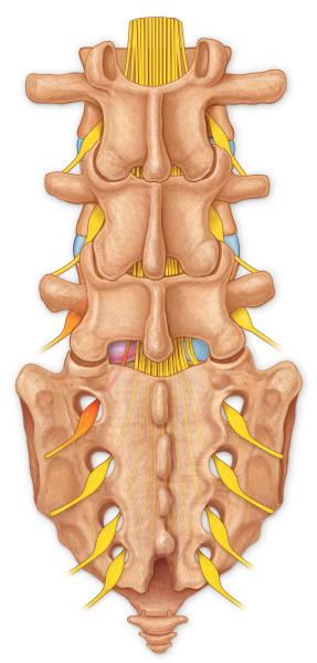 detalle medicinal ilustracion perpendicular herido lesion