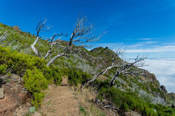 from, mountain, pico, arieiro, to, pico - 28215317