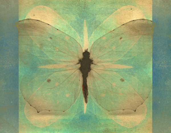 vintage, butterfly - 28215390