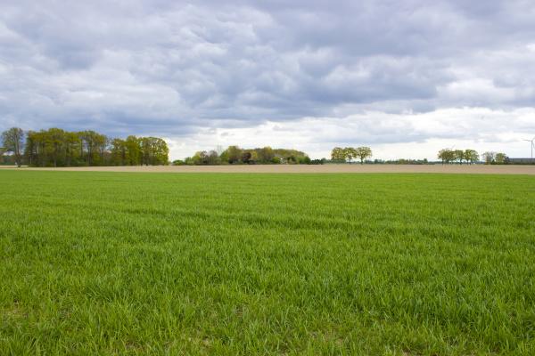 paisaje, rural, alemán, región, del, bajo, rin - 28217756