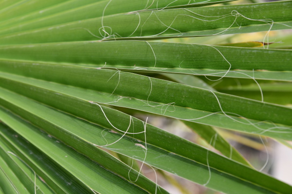 palm, leaves, in, the, province, of - 28217280