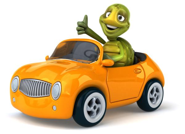 fun, turtle - 28218070