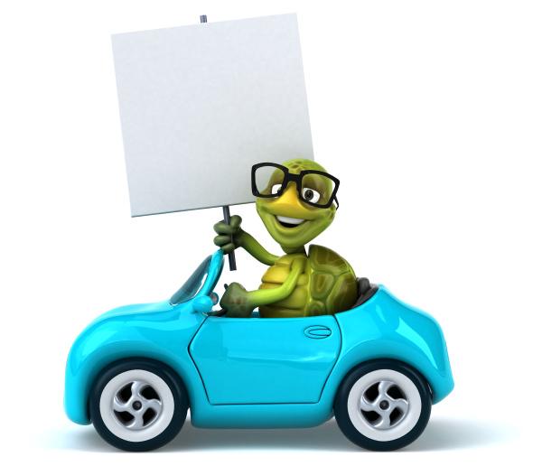 fun, turtle - 28218200