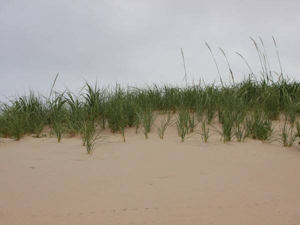 cima, de, la, duna, de, arena - 29745615