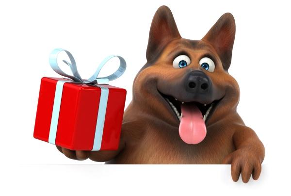 divertido, perro, pastor, alemán, , - 30725532