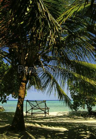 viaje fiesta vacaciones maldivas palmera facilitar