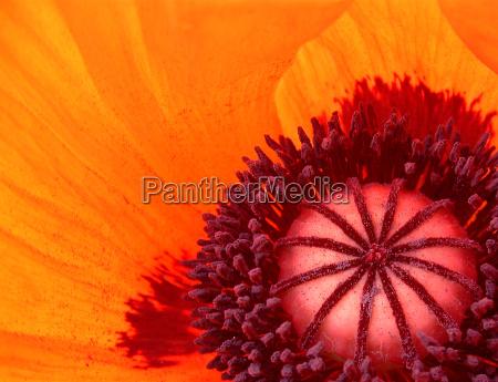 naranja flash