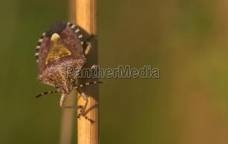 luz primer plano insecto los insectos
