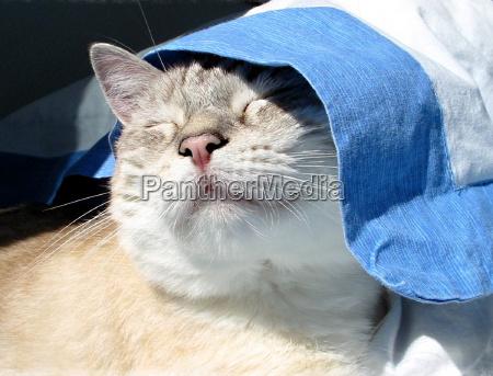 azul relajacion cama sol caucasico suenyo