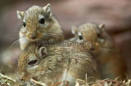 ratones pobres 2