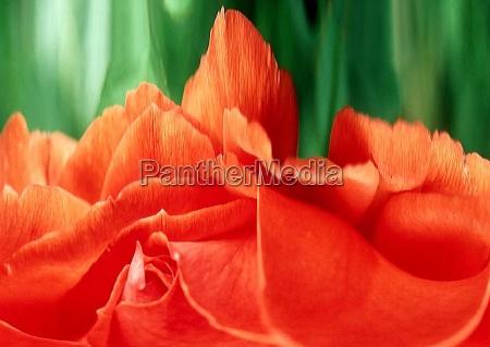 hermoso bueno primer plano composicion flor
