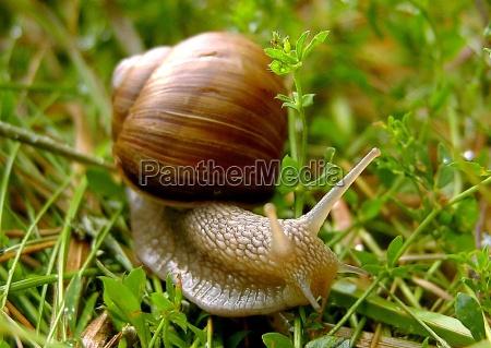 close up animal verde marrom animais