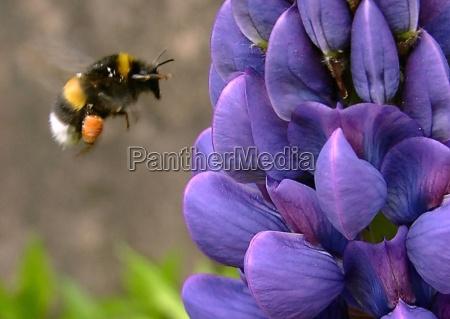 primer plano vuelo insecto flor planta