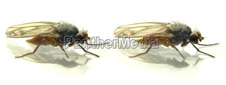 close up detalhe opcional inseto marrom