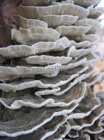 marrom fungo empilhados simbiose um sobre