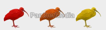 pajaro aves primavera exotico plumaje brasil