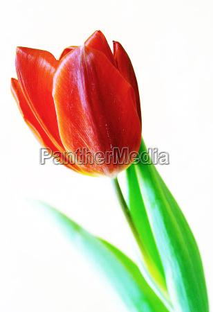 opcional flor planta verde luz del