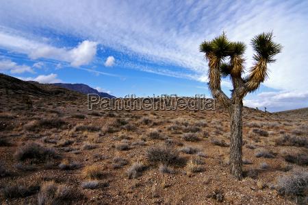 arbol desierto eeuu california seco matas