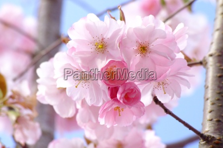 azul flor colorido flores planta primavera