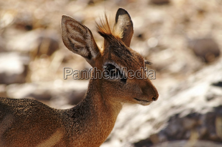 parque nacional africa namibia ojo organo