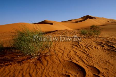 desierto verde africa libia tarde arbusto