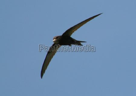 vuelo pajaro los animales aves navegar
