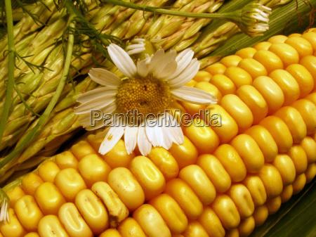 salud planta flor agricultura de plantas