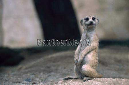 entretenimiento animal mamifero boca africa namibia