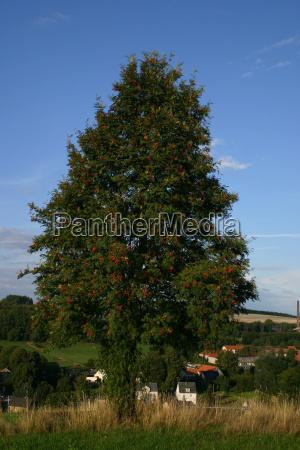 azul casas arbol superior hierbas erzgebirge