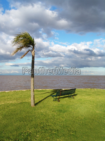 palm tree and bench in the