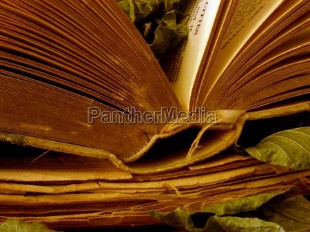 ocio relajacion hojas nostalgia tranquilidad libros