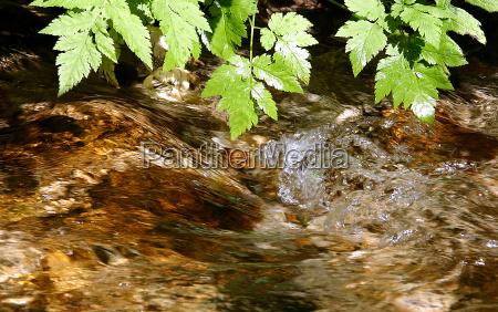 austria refresco arroyo humedo refrescante fresco