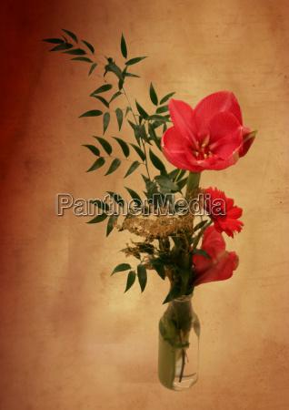 naturaleza muerta primer plano flor planta