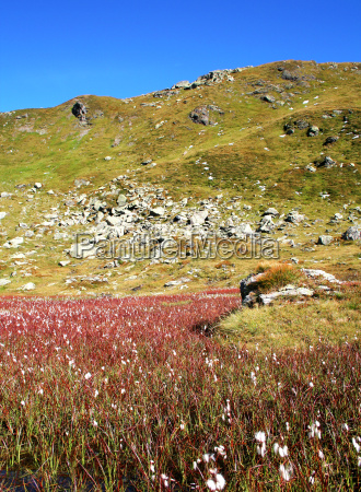 tyrolean pasture