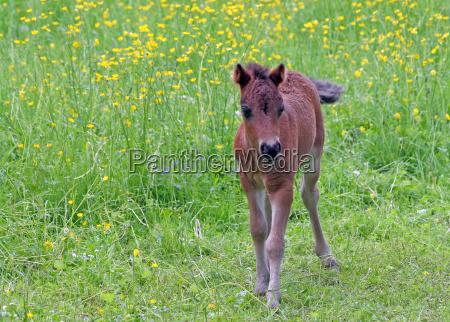 caballo animal los animales flor flores