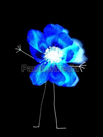 azul jardin planta flor hombre flores
