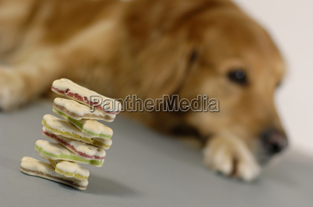 control educacion alimentar animal mascotas hambre