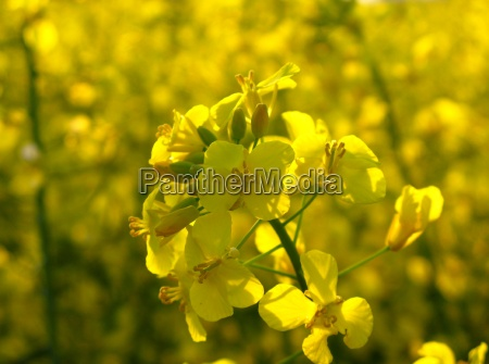 orgy in yellow