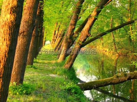 lean trees
