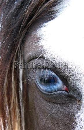cavalo olho orgao olhos ver aluno