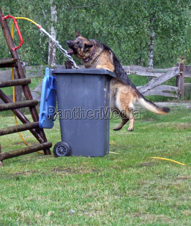 jardin mascotas dentadura postiza piel perro