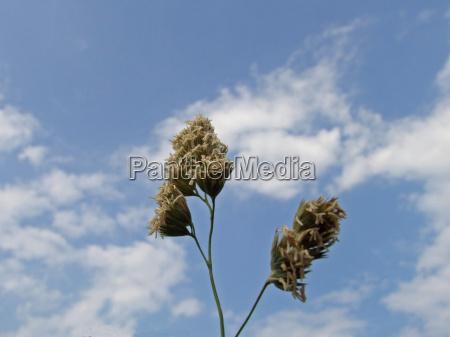 flor planta nube seco cielo delgado